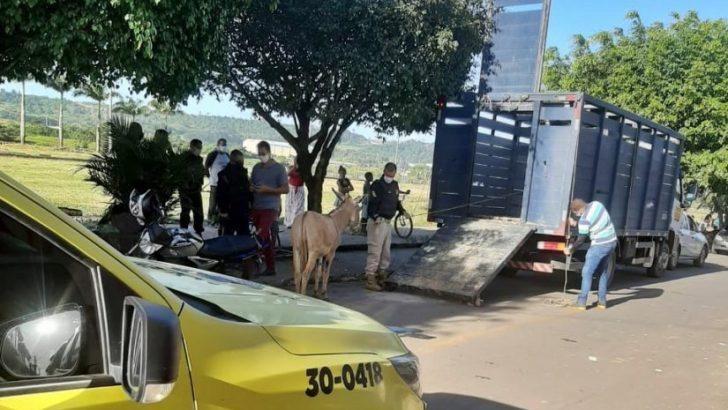 Animais de rua são recolhidos em ação conjunta com a GCM de São Miguel dos Campos